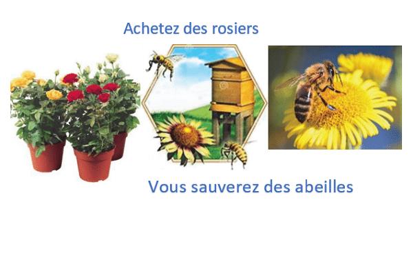 Des rosiers pour sauver des abeilles